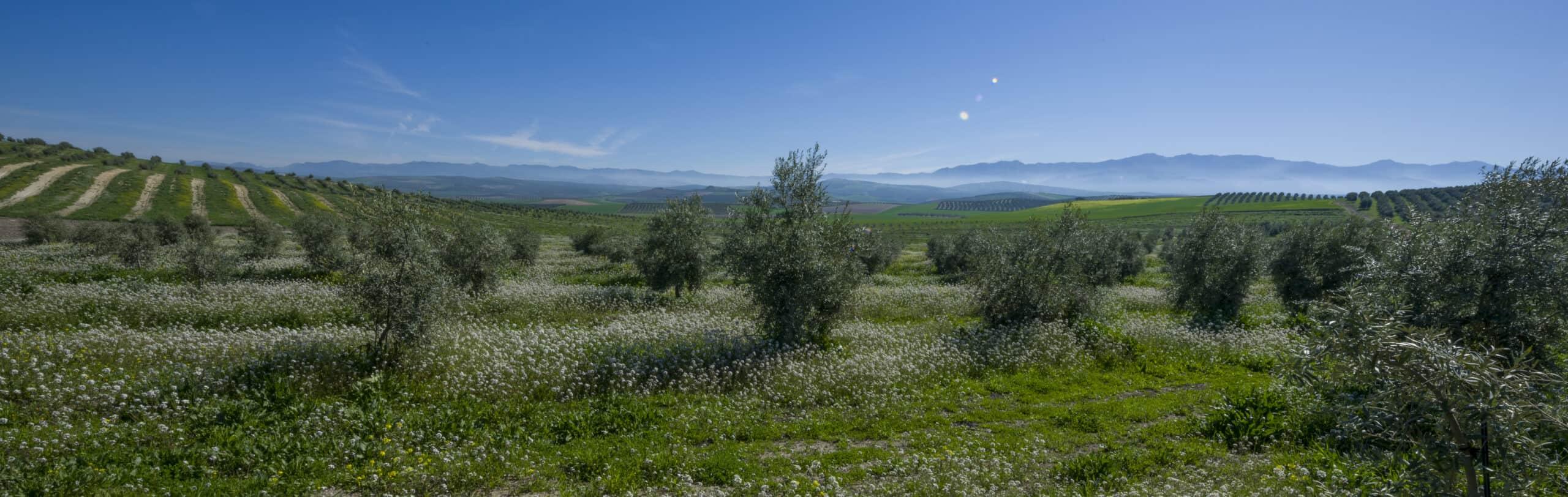 Hacienda Vadolivo©