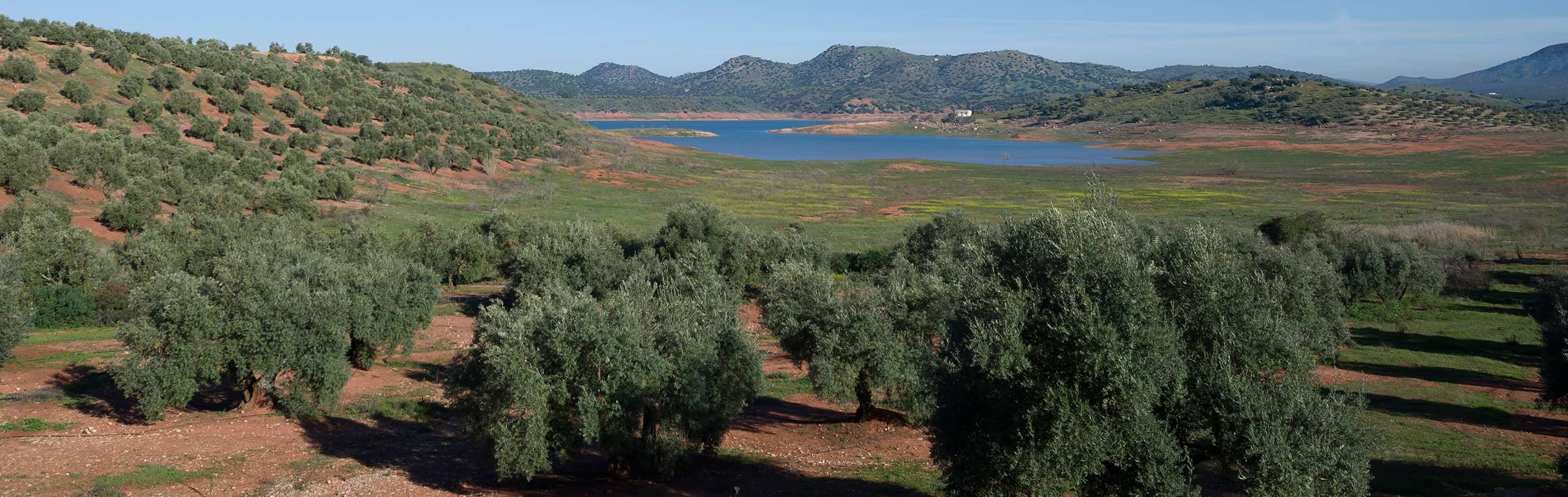 vista aérea de nuestra hacienda AOVE Vadolivo Sierra de Cazorla