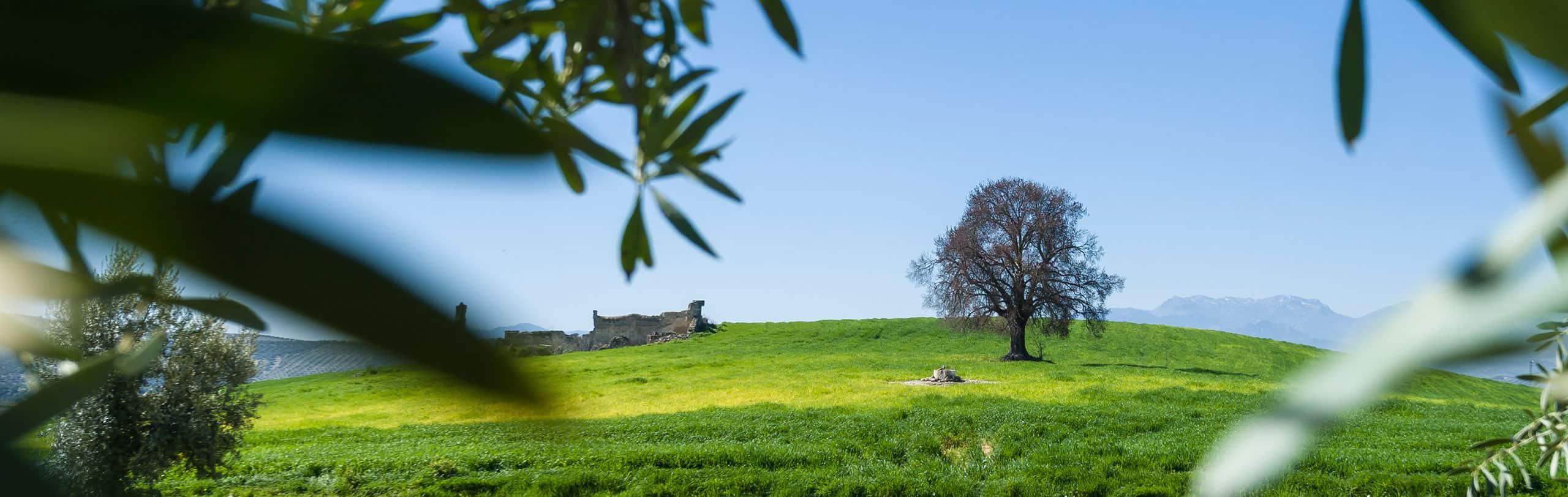 Entorno paradisiaco Sierra de Cazorla Hacienda Vadolivo aceite de oliva virgen extra